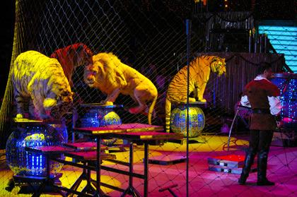 Capital circus Budapest