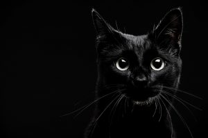 Hungarian superstitions Black cat